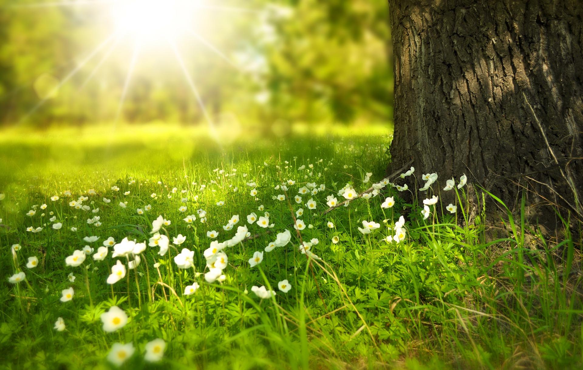 Bild von einem Garten bei Sonnenschein